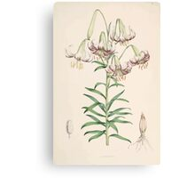 A Monograph of the Genus Lilium Henry John Elwes Illustrations W H Fitch 1880 0059 Canvas Print