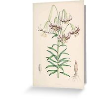 A Monograph of the Genus Lilium Henry John Elwes Illustrations W H Fitch 1880 0059 Greeting Card
