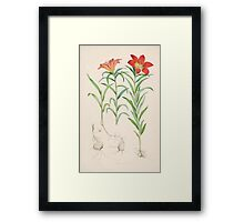 A Monograph of the Genus Lilium Henry John Elwes Illustrations W H Fitch 1880 0073 Framed Print