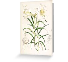 A Monograph of the Genus Lilium Henry John Elwes Illustrations W H Fitch 1880 0191 Greeting Card