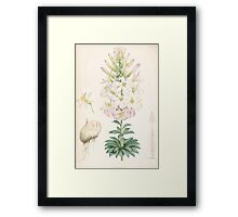 A Monograph of the Genus Lilium Henry John Elwes Illustrations W H Fitch 1880 0185 Framed Print