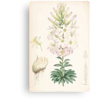 A Monograph of the Genus Lilium Henry John Elwes Illustrations W H Fitch 1880 0185 Canvas Print