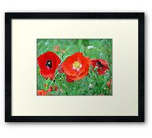 Red Poppies In The Rain Framed Print