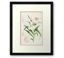 A Monograph of the Genus Lilium Henry John Elwes Illustrations W H Fitch 1880 0143 Framed Print