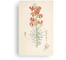 A Monograph of the Genus Lilium Henry John Elwes Illustrations W H Fitch 1880 0089 Canvas Print