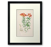 A Monograph of the Genus Lilium Henry John Elwes Illustrations W H Fitch 1880 0069 Framed Print