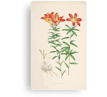 A Monograph of the Genus Lilium Henry John Elwes Illustrations W H Fitch 1880 0069 Canvas Print