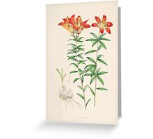 A Monograph of the Genus Lilium Henry John Elwes Illustrations W H Fitch 1880 0069 Greeting Card