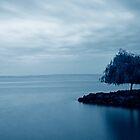 One Tree............France by Imi Koetz