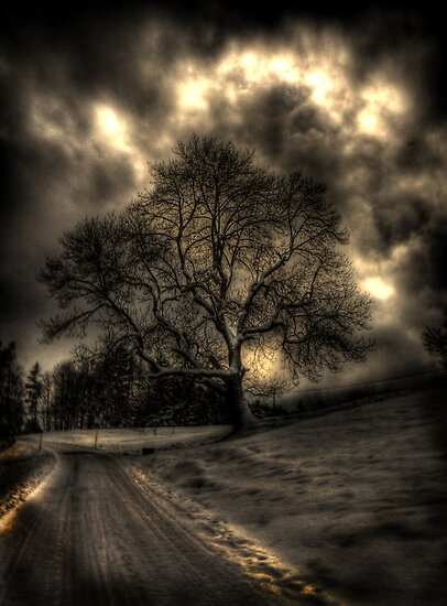 My Favourite Tree - The Haunting by Luke Griffin