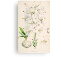 A Monograph of the Genus Lilium Henry John Elwes Illustrations W H Fitch 1880 0085 Canvas Print