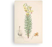 A Monograph of the Genus Lilium Henry John Elwes Illustrations W H Fitch 1880 0047 Canvas Print
