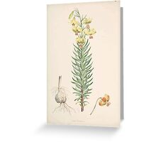A Monograph of the Genus Lilium Henry John Elwes Illustrations W H Fitch 1880 0047 Greeting Card