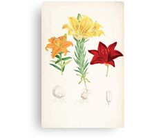 A Monograph of the Genus Lilium Henry John Elwes Illustrations W H Fitch 1880 0173 Canvas Print