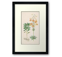 A Monograph of the Genus Lilium Henry John Elwes Illustrations W H Fitch 1880 0127 Framed Print