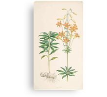 A Monograph of the Genus Lilium Henry John Elwes Illustrations W H Fitch 1880 0127 Canvas Print