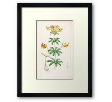 A Monograph of the Genus Lilium Henry John Elwes Illustrations W H Fitch 1880 0155 Framed Print