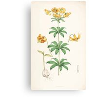 A Monograph of the Genus Lilium Henry John Elwes Illustrations W H Fitch 1880 0155 Canvas Print