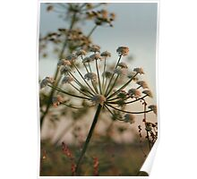 Summer parsley Poster