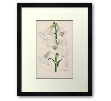 A Monograph of the Genus Lilium Henry John Elwes Illustrations W H Fitch 1880 0065 Framed Print