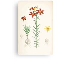 A Monograph of the Genus Lilium Henry John Elwes Illustrations W H Fitch 1880 0199 Canvas Print