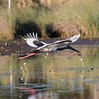 The Jabiru Arrow by byronbackyard