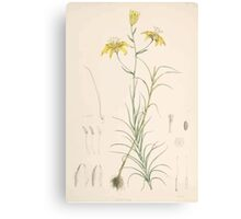 A Monograph of the Genus Lilium Henry John Elwes Illustrations W H Fitch 1880 0055 Canvas Print