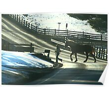 Draft Horse Crossing Poster