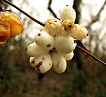 Winter's Fruit by Brenda Boisvert