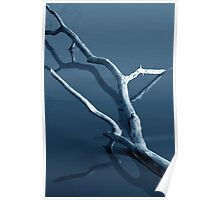 FallenTree in Water Poster