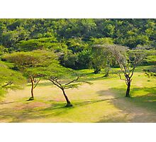 Masai Lodge Park, KENYA Photographic Print