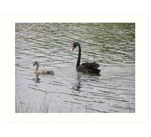Black swan and cygnet Art Print