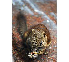 Squirrel-Sabah Photographic Print
