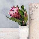 Protea by Antaratma Images