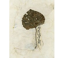 Leaf On Kinwashi Photographic Print