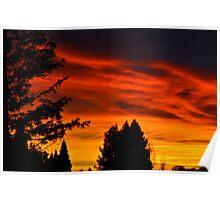 Santa Rosa Sunset w/ Trees Poster