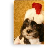 Merry Christmas from one Shih Tzu to another Canvas Print