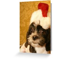 Merry Christmas from one Shih Tzu to another Greeting Card
