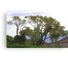 Trees Of Death Valley Canvas Print