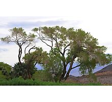 Trees Of Death Valley Photographic Print