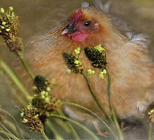 """Chickies in the Grasses ..."" by Rosehaven"
