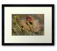 """""""Chickies in the Grasses ..."""" Framed Print"""