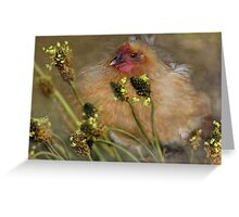 """Chickies in the Grasses ..."" Greeting Card"