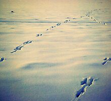 Traces in the Snow by Friederike Alexander
