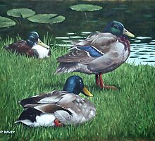 mallards on river bank by martyee