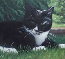 cat by martyee