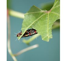 Caterpillar 3 Photographic Print