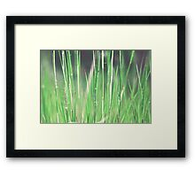 Simple Serenity Framed Print