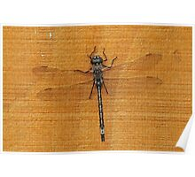 Dragonfly at Plantation Campground, Grampians National Park Poster