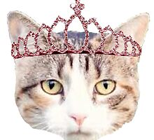 Cat with a Pink Tiara by megsiev